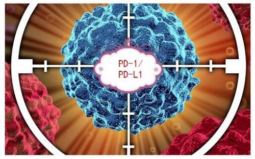 首个皮下注射的PD-L1单抗KN035上市申请获国家药监局受理