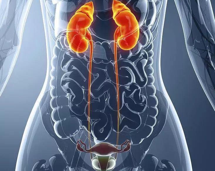 PD-1免疫治疗药物拓益®尿路上皮癌适应症在中国获批